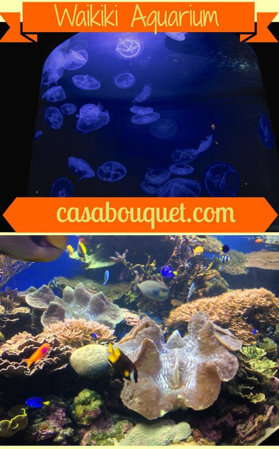 The Waikiki Aquarium is a quiet, glitz-free aquarium with university students on the staff. See reef fish, green turtles, monk seals, and moon jellies!