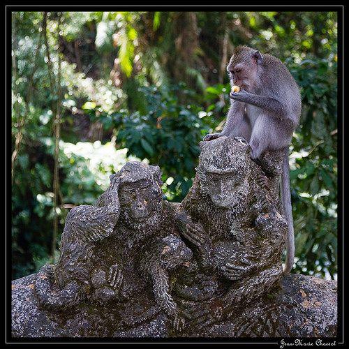 Monkey Forest, Ubud, Bali, Indonésie