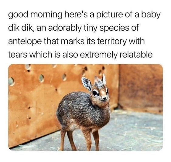 16 Wholesome Memes To Start The Week Off Right