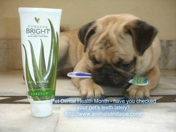 February is Pet Dental Month