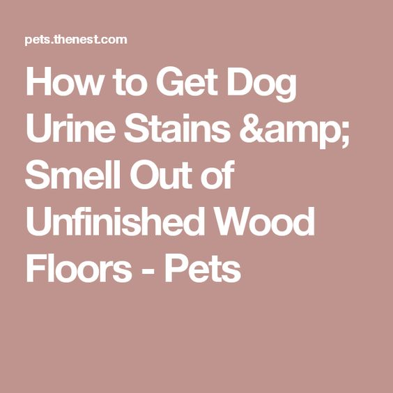 How to Get Dog Urine Stains & Smell Out of Unfinished Wood Floors - Pets - How To Get Dog Urine Stains & Smell Out Of Unfinished Wood Floors