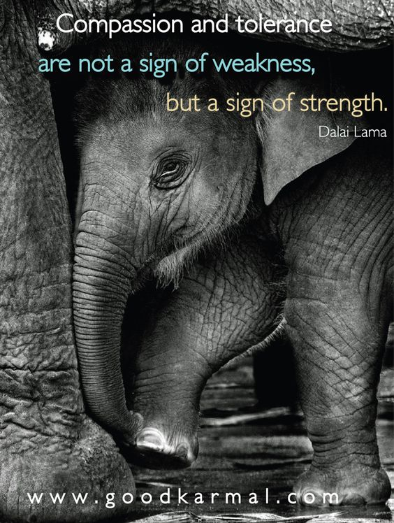 "Compassion and tolerance are not a sign of weakness, but a sign of strength."" Dalai Lama #dalailama #inspiration:"