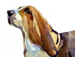 Basset-hound watercolour