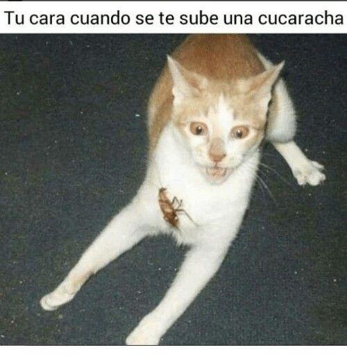 Pin De Maria Itati Melgarejo En Memes Meme Gato Memes De Animales Divertidos Gatitos Divertidos