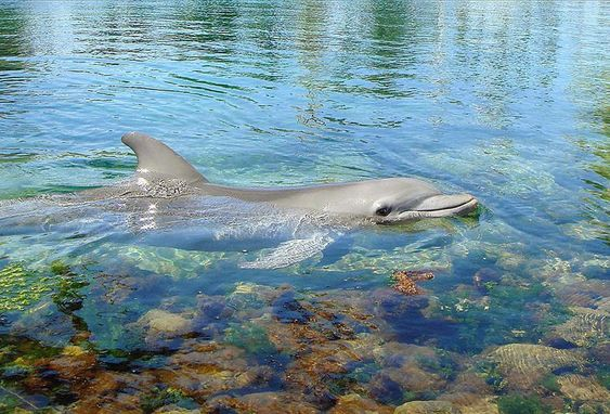 Find Out What The Best Marine Animal Jobs Are Marine Animals Marine Biology Marine Mammals