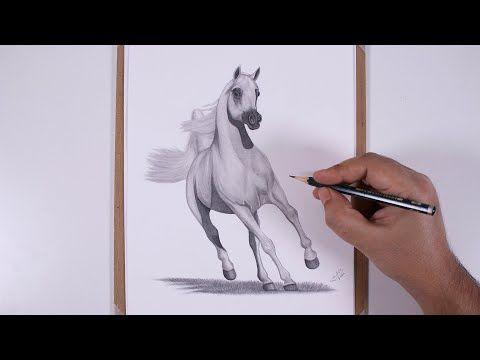 How To Draw A White Horse With Pencil Realistic Speed Drawing Drawings White Horse Horses