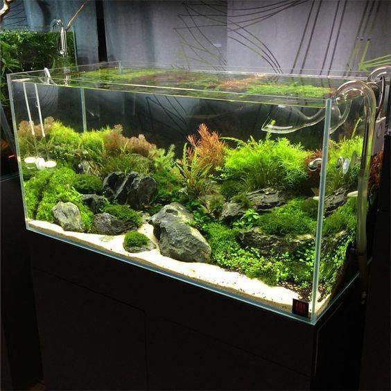 45 Stunning Aquarium Design Ideas For Indoor Decorations Page 26