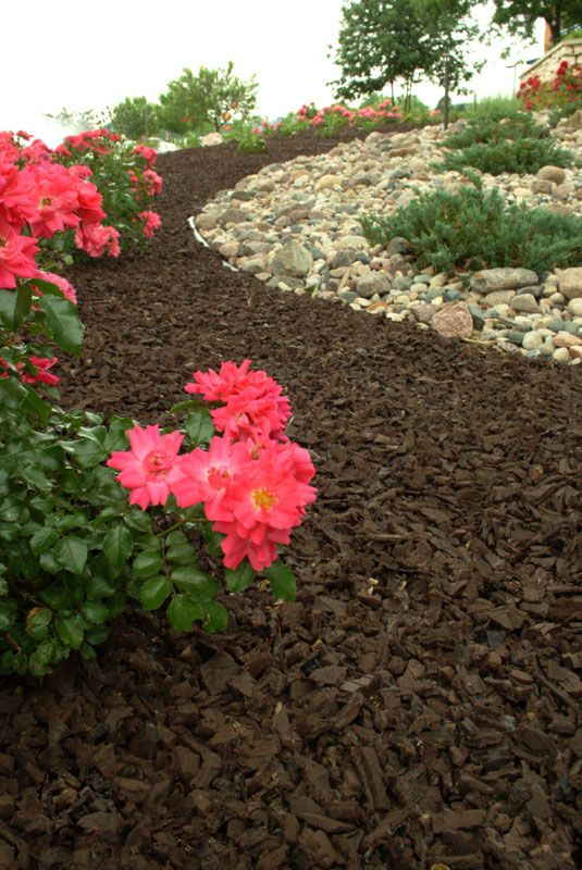 Roses and Brown Rubber Mulch for low maintenance Gardens and Landscapes #roses #rubbermulch #RoosterRubber