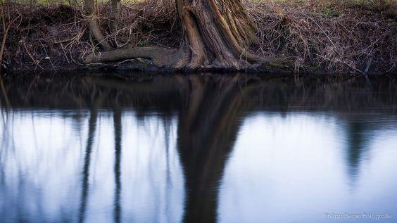 https://flic.kr/p/k2oeft | Ruhe | Diesen schönen Baumstamm entdeckte ich während eines Abendspazierganges an der Bode (Fluss in (Quedlinburg/Sachsen-Anhalt/Deutschland).