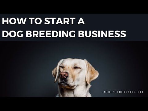 How To Become A Legit Dog Breeder Make Money Dog Breeds Dogs