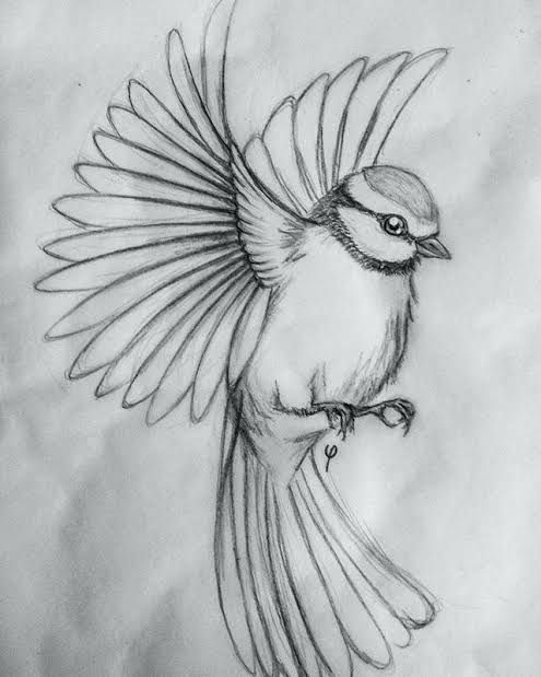 Easy Sketch Ideas For Beginners Google Search Animal