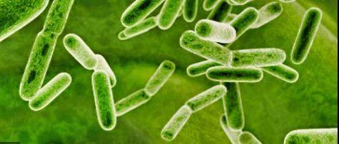 Picture of probiotics.  (good bacteria)
