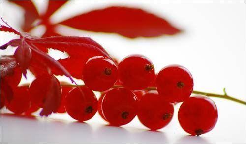 Leinwandbild 100 x 60 cm - Rote Beeren Früchte von Tanja Riedel - auch in anderen Größen und als Poster erhältlich von POSTERLOUNGE, http://www.amazon.de/dp/B006NOAJO4/ref=cm_sw_r_pi_dp_Q6fzrb0Q2NKHX