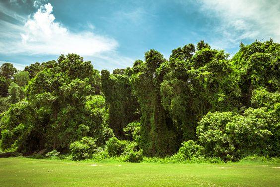 The mystic island of Pulau Besar - Synapticism