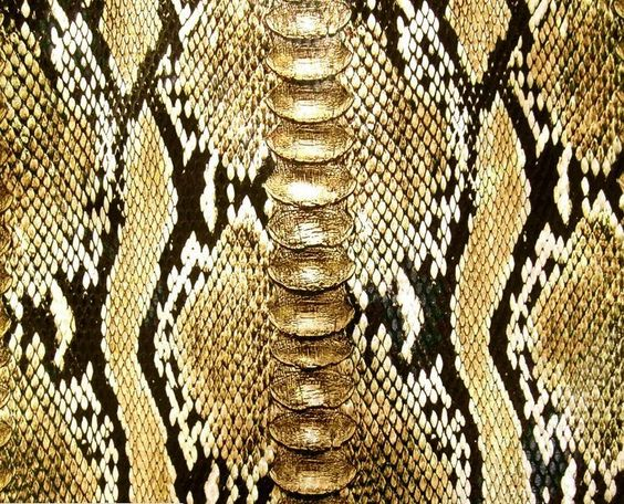 limited yellow snake skin animal print upholstery vinyl fabric faux leather ebay animal. Black Bedroom Furniture Sets. Home Design Ideas