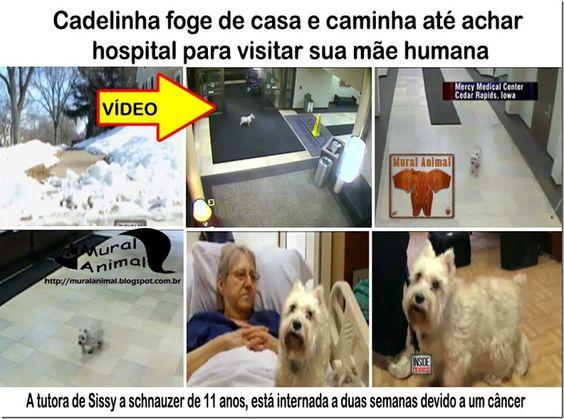 Mural Animal: Cadelinha foge de casa e caminha até achar hospital para visitar sua mãe humana