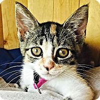 Adopt A Pet :: Oona - Cherry Hill, NJ