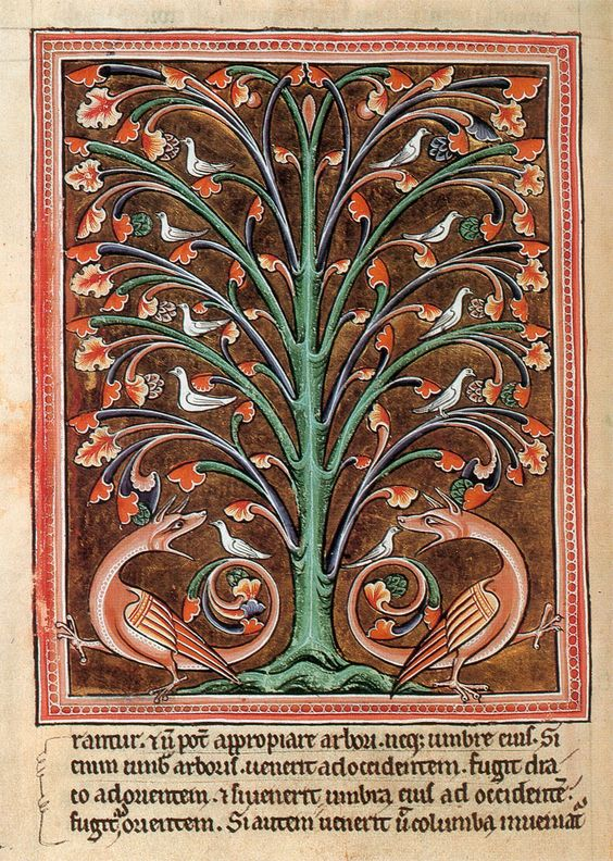 The Perindens Tree.: