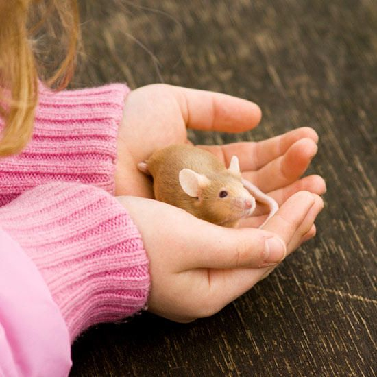 6 Best Small Pets To Consider For Your Child Small Pets For Kids
