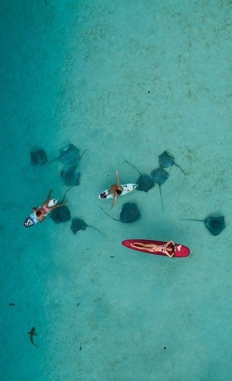Swim with sting rays.