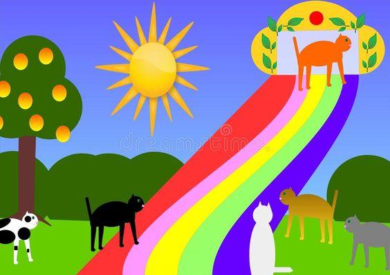 Image result for rainbow bridge cat