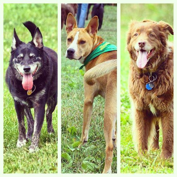 Happy & tired faces at the end of the weekend. That's what we like to see! #evasplaypupspa #doggievacays #dogsinnature #dogdaysofsummer #dogsofinstagram #adoptdontshop #badassbk #endlessmountains #mountpleasant