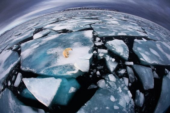 366 days: Images of the year : Nature News & Comment