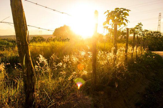 Fim de tarde. Pôr-do-sol. Sol. Luz. Natureza. Campo.
