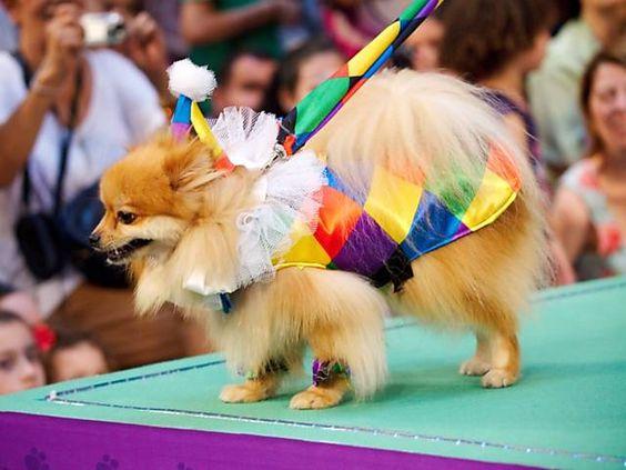 carnival costume contest for dogs********Folha de S.Paulo - Folhinha - Shopping organiza 'cãocurso' de fantasias para o Carnaval - 06/02/2013