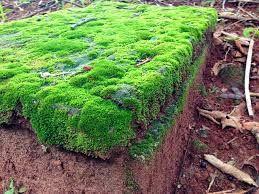 As briófitas são terrestres de ambientes úmidos, sombreados e quentes; algumas espécies vivem em água doce e não ocorrem no mar. No Brasil, um dos ambientes mais favoráveis para o crescimento dessa vegetação é a Mata Atlântica.