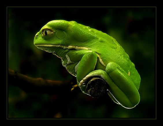 ~~ It's not easy being green by True_Bavarian ~~
