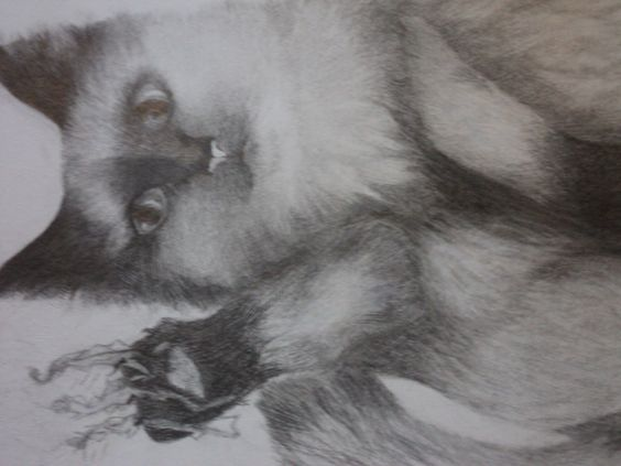 realistic cat drawing in graphite by 1bluwall on Etsy