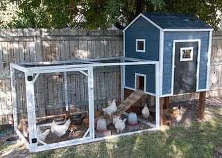 Home for my many chickens..