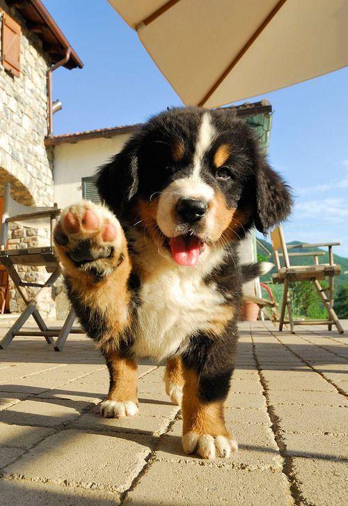 自撮りするかわいい子犬
