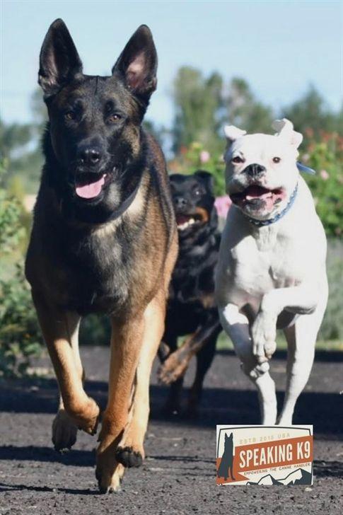 Koehler Method Of Dog Training Dog Training 101 Duet Dog