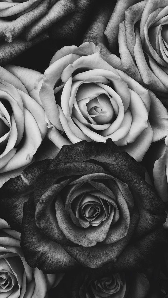 Black roses discovered by Dark Soul on We Heart It