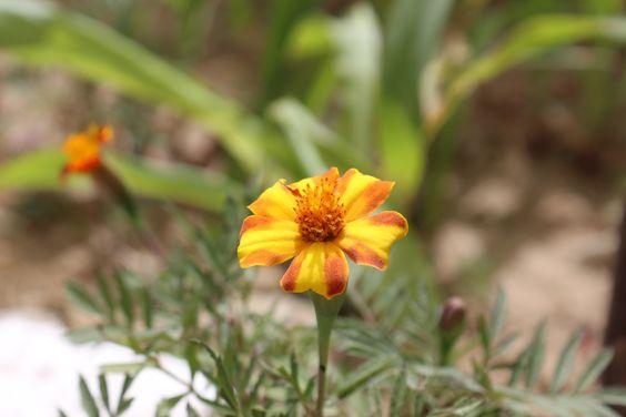 flower by my photoghraphy