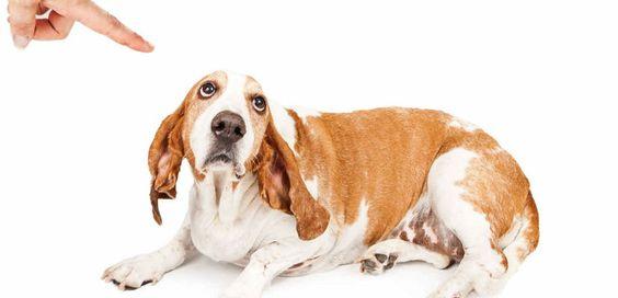 Cómo regañar al perro correctamente - http://www.mundoperros.es/reganar-al-perro-correctamente/