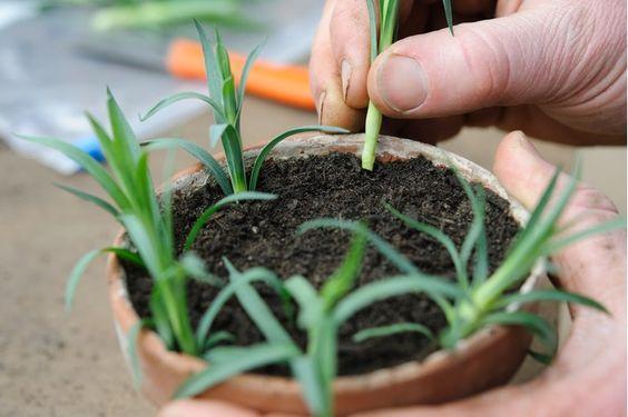 9d613b0f1938980e1fc10ec9a7fd856b - How To Take Hydrangea Cuttings Gardeners World