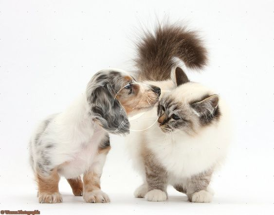 Here kitty kitty.