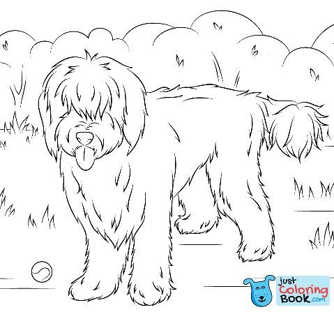 Australian Labradoodle Coloring Pages Free Download Dog Coloring