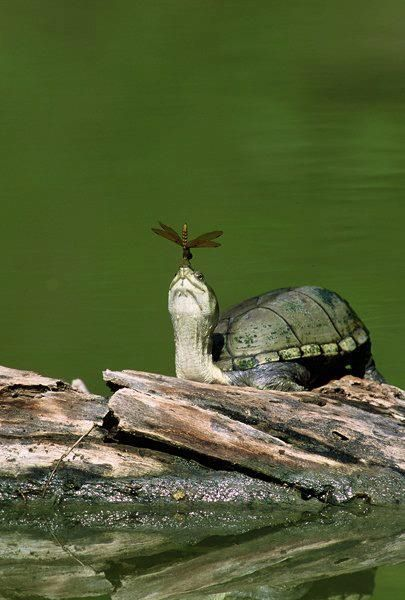 Turtle and Dragon Fly
