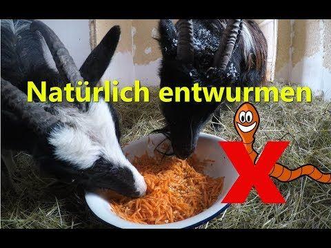 Naturlich Entwurmen Ohne Chemie Fur Ziegen Pferde Huhner Hunde