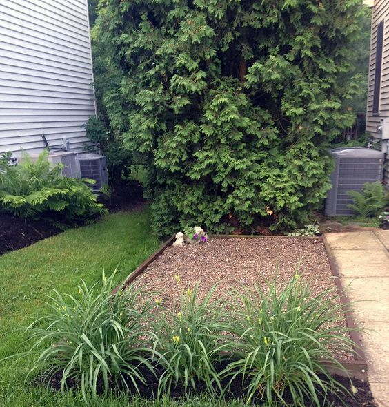 Pea Gravel Backyard For Dogs : the grass doggies grasses cool ideas backyards diy and crafts search