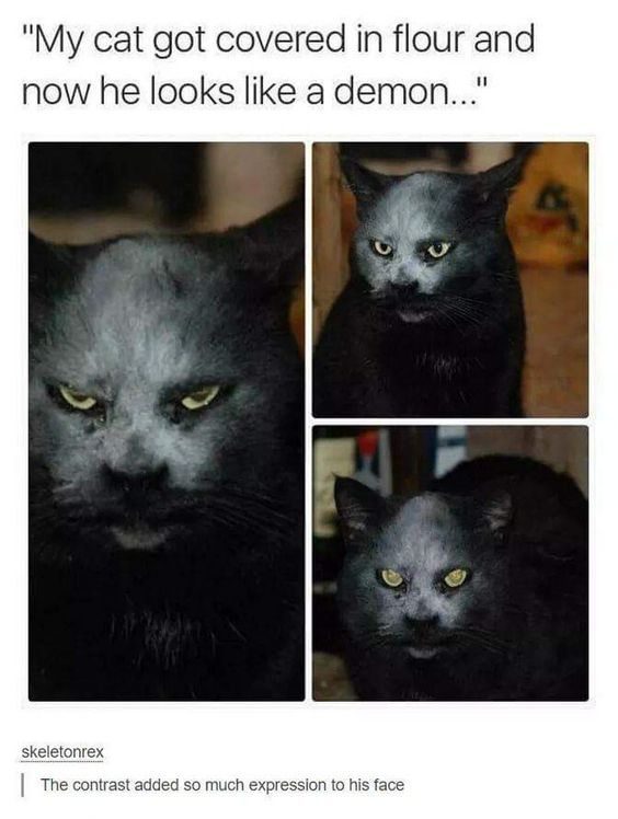 Expressions: | 27 Cats Pictures That Are Never Not Funny | That is a scary look on a cat: