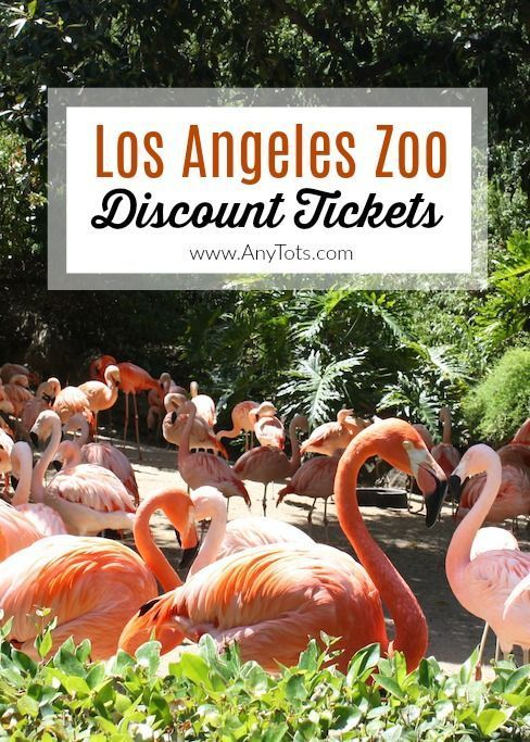 La Zoo Discount Tickets 2020 14 50 Any Tots Los Angeles Zoo Zoo Zoo Tickets