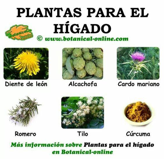 Edtas son plantas medicinales para el igado