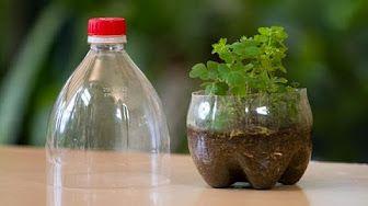 Terrarium Hecho de Botellas CocaCola Recicladas - YouTube