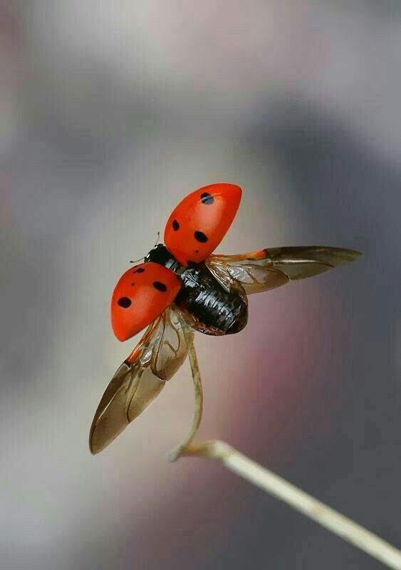 Pin By Mona Moni On Ladybug Insect Photos Insects Ladybug