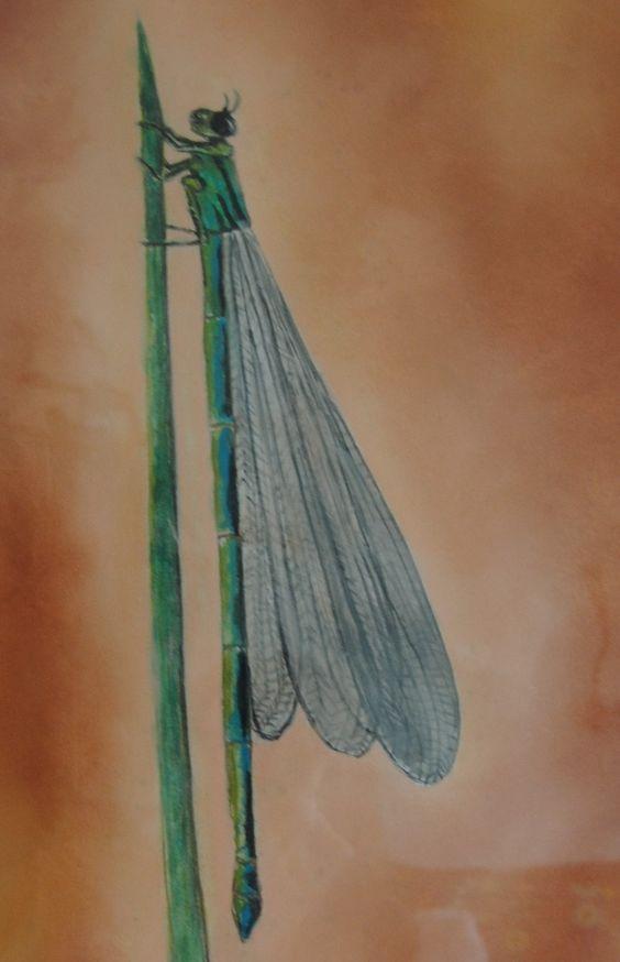 Libelle, insect,schilderij, painting, waterverf met pastelkrijt